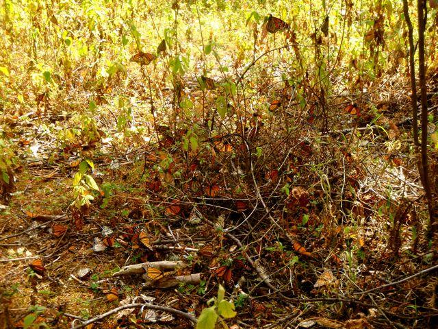 Les papillons poussent dans les arbres runtheplanet fr for Portent feuilles