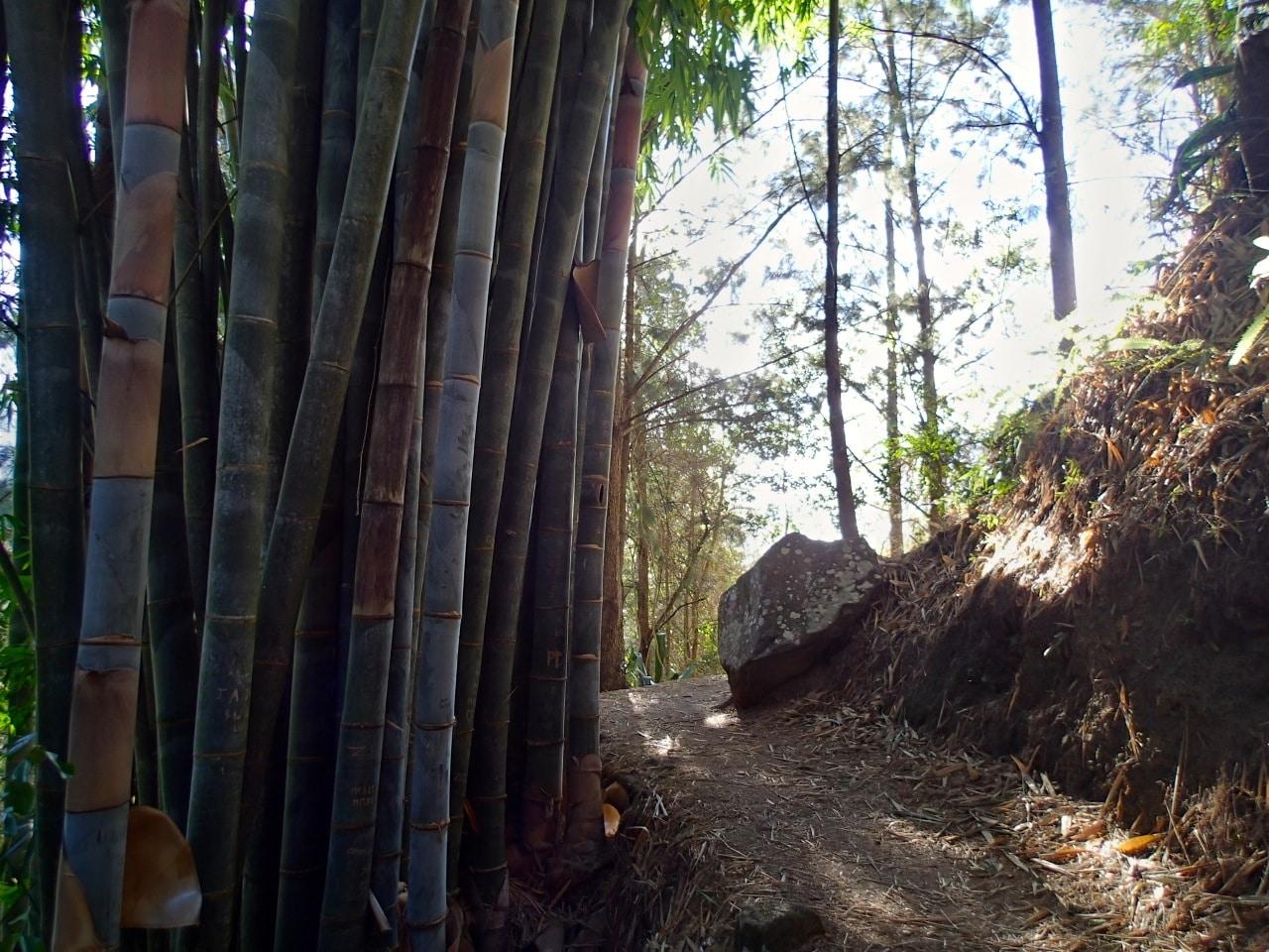 Bambous de 20cm !