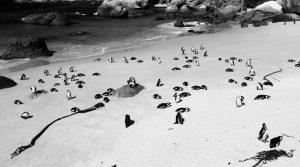 pinguins - 1