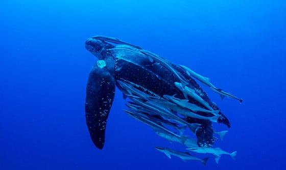 Sea-Turtle---29687